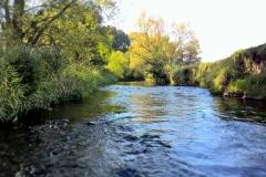 Naturnaher Abschnitt der Ilme (Bildrechte: R. Eikenberg | Fischereiverein Einbeck e.V.)