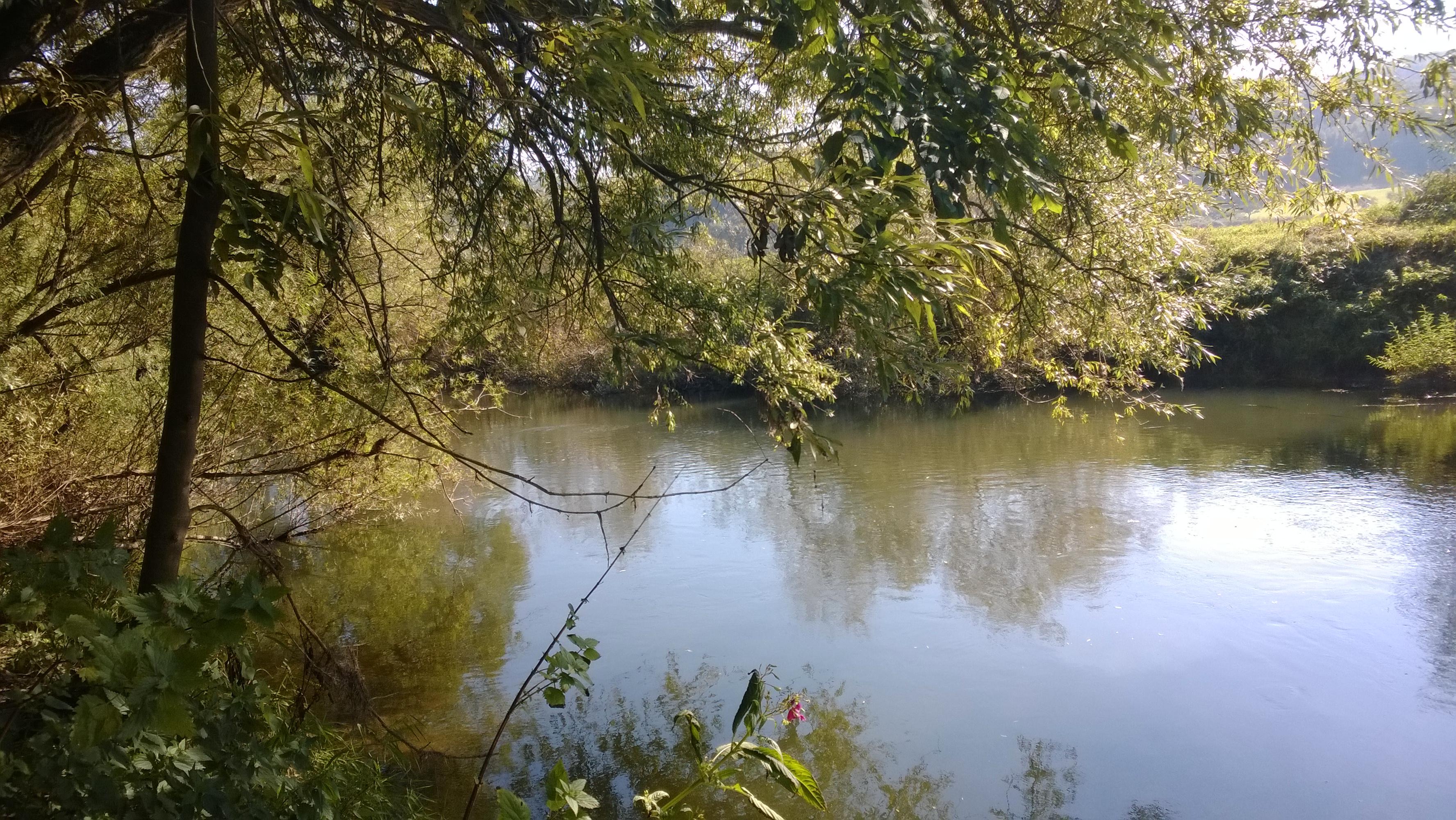 Leine unterhalb der Ilme-Mündung