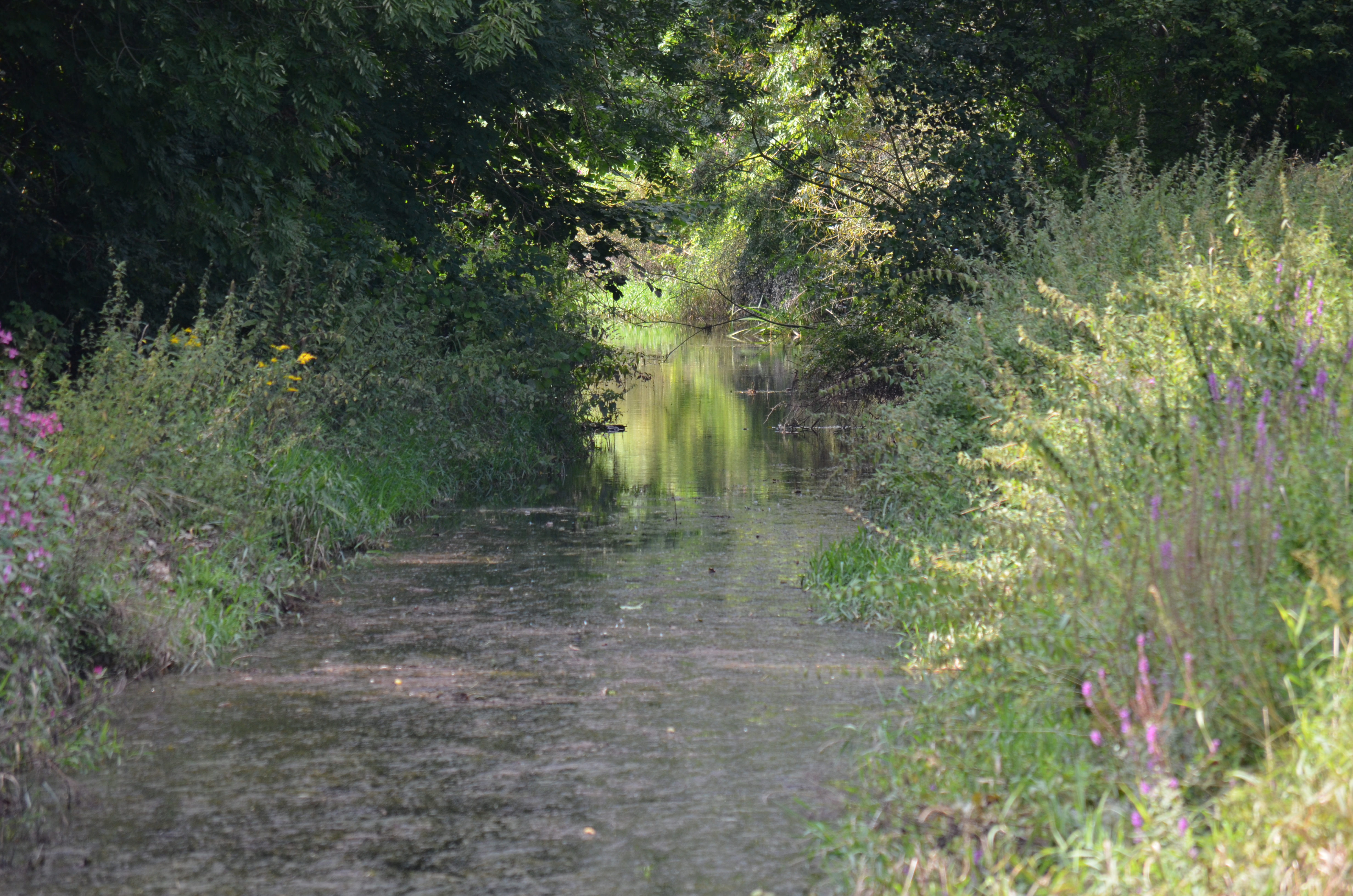 Mühlenkanal vor der Mündung in die Ilme